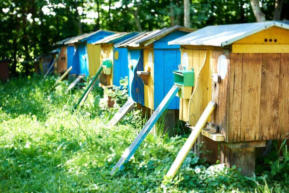 Sezónne včelárstvo vonku na záhrade, produkcia medu.