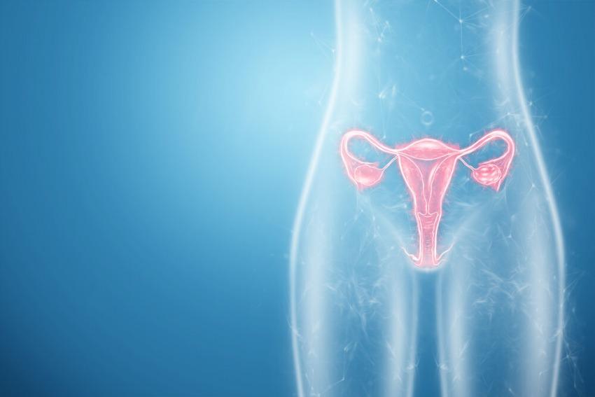 ženské orgány